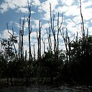 Trees and Clouds- Florida Everglades by mmcc0713