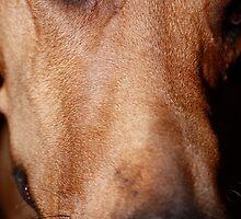 Hamilton the Wonder Dog by Amanda Yetman