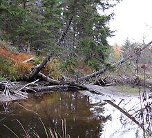 Fallen Tree Over Water by mmcc0713
