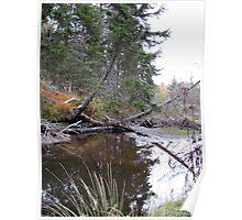 Fallen Tree Over Water Poster