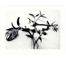 Disappearing Nature Art Print