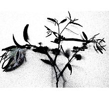 Disappearing Nature Photographic Print