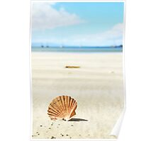 shell on the beach Poster