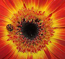 ladybird on fire  by jade adams