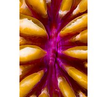 Coral Polyp Photographic Print
