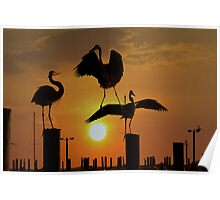 Herons At Sunset Poster
