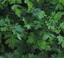 Natural fresh green leaves by nazanin86
