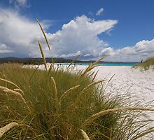 The Tasmanian Beach Without a Name by Andy Sinclair