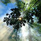Morning Star by ccwri2010