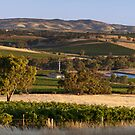 Hentley Farm Panorama by Paul Thompson