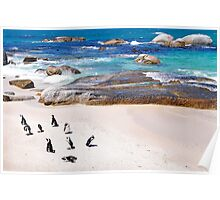 African Penguins, Boulders Beach, Simons Town, South Africa Poster
