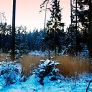 The winter in the evening by Antanas