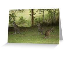 Feeding Kangaroos at Yarongabilly Caves Greeting Card