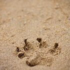 Sandy Paw by Zac Damiani