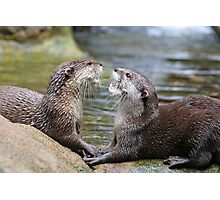 hungry otters Photographic Print