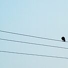 Alone - bird on the wires by Janice E. Sheen