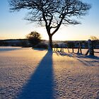 Winter Ash 2 by Chris Charlesworth