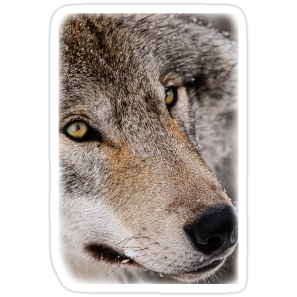 Wolf Shirt - 7 by Michael Cummings