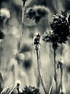 still life -  tonal study by dennis william gaylor