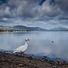 Loch Lomond Goose by Claire Tennant