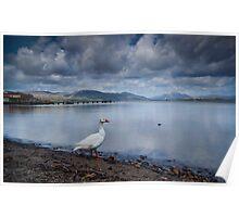Loch Lomond Goose Poster
