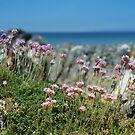 Isle of Gigha Beach Scene by Claire Tennant
