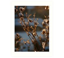 Backlit Weeds Art Print