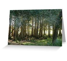 under the cypress trees Greeting Card