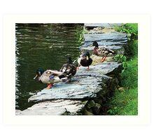 Ducks by Pond Art Print