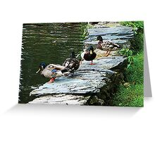 Ducks by Pond Greeting Card