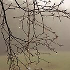 Misty Morning by Trudy Wilkerson