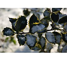 snow and holly Photographic Print
