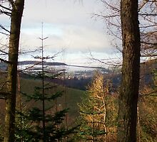 Peebles Forrest view by blueart