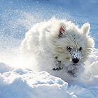 Westie in the snow by Gemma  Simpson