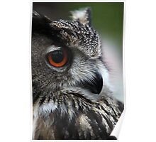 The Owl with Orange Eyes Poster