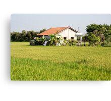 Rice Build Canvas Print