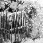 The Gate by Pamela Jayne Smith