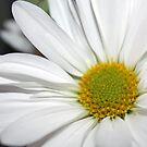 Daisy, Daisy by WeeZie