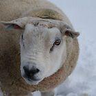 Happy Ewe Year! by laurawhitaker