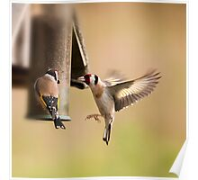 Goldfinch arrival Poster