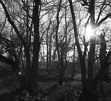 Winter Sun by Joe Bennett