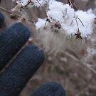 Snow Settling  by Rose9