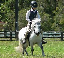 Ridden Shetland Pony Stallion - Nabiac Show by louisegreen