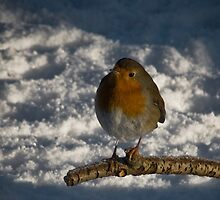 Robin Redbreast by Chris Clark