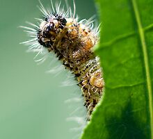 Hungry Caterpillar by Ross Larner