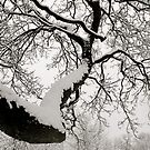 Snowy branches by Richard Pitman