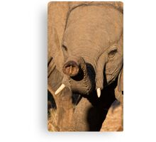The Trunk Canvas Print