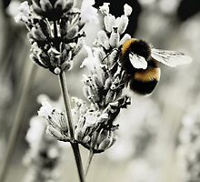 Furry Buzz by enseadesign