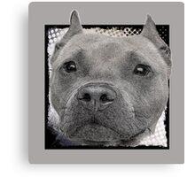 Pitbull Dog Canvas Print