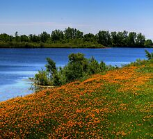 Field of Flowers - HDR by Larry Trupp